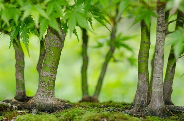 Nahaufnahme Bonsai-Wald